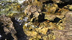 Rocky coastline, detail Stock Footage
