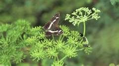 Nature Japan Stock Footage