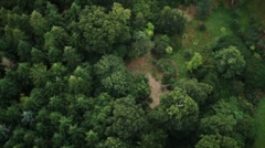 Forest Fly Over Stock Footage