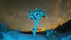 Joshua Tree at Night Stock Footage