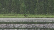 Stock Video Footage of moose in lake3