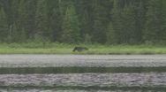 Stock Video Footage of moose in lake3