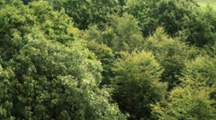 Track/Fly into Trees Stock Footage
