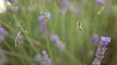 Spider and cobweb on plants and flowers Stock Footage