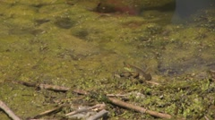 Frog jumps out of shot again Stock Footage