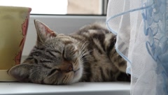 cat sleep - stock footage