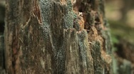 Stock Video Footage of Close up of broken stump with moss.