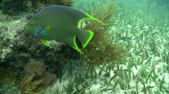 Underwater shots of tropical fish. Stock Footage