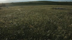 Mountainf meadow in the evening - stock footage