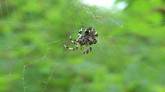 Rainy weather - for a spider badly Stock Footage