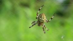The spider kneads asleep legs Stock Footage