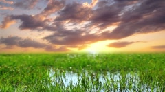 Green grass on a background sunset Stock Footage