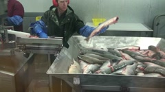 Stock Video Footage of fish cannery factory
