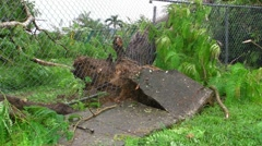 Hurricane Irene Aftermath-Fallen Tree breaks sidewalk - stock footage