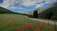 (1270) Beautiful summer wildflowers mountain wilderness meadow landscape Stock Footage