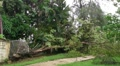 Hurricane Irene Aftermath-Fallen Tree breaks cement wall and fence Footage