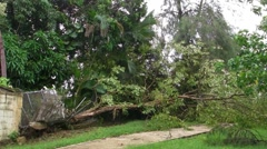 Hurricane Irene Aftermath-Fallen Tree breaks cement wall and fence - stock footage