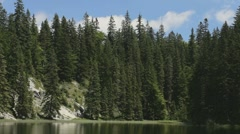 Pine trees on the shore of a small lake. - stock footage
