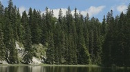 Stock Video Footage of Pine trees on the shore of a small lake.