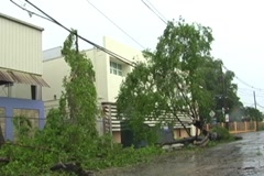Hurricane Irene Aftermath-Fallen trees over power cables next to school - stock footage