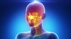 Female scan HEAD anatomy in blue x-ray loop Stock Footage