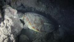 Sleeping green turtle great barrier reef with remora Stock Footage