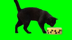 Black scared cat Stock Footage