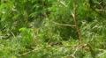 Hurricane Irene Aftermath - Iguana resting on fallen tree under first sun rays HD Footage