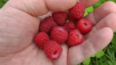Raspberry gathering - a useful occupation - stock footage
