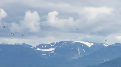 Gulls by Cloudy Mountains - pan Stock Footage