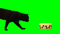 Cat being frighten runs away Stock Footage
