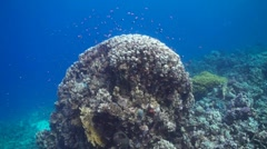 A coral block in the Red Sea Stock Footage