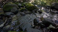 Stock Video Footage of Babbling brook, natural water sound