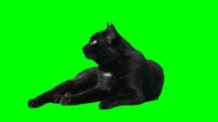 Black lying cat Stock Footage