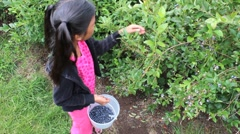 Girl Picking Fresh Blueberries Stock Footage