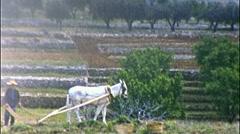 Spanish Farmer Plowing Field Horse Hoe Planting 1950 Vintage Film Home Movie 292 - stock footage