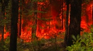 Mountain forest fire, in the fire #2, dramatic Stock Footage