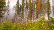 Mountain forest fire, in the fire #6, dramatic, pan Stock Footage