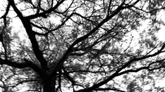 Panning of Trees Stock Footage