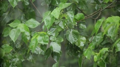 Rain in tropical forest Stock Footage