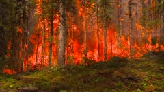 mountain forest fire, in the fire #31, short zoom, wall of flame dramatic - stock footage