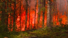 Mountain forest fire, in the fire #33, double pan Stock Footage