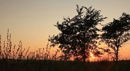 Stock Video Footage of Twilight sunset - two trees panning and orange clear sky