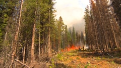Stock Video Footage of mountain forest fire, in the fire #76, firefighter crew