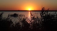 Summer sunrise on the lake with a water bird singing Stock Footage