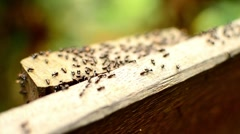 Close-up footage of group of ants running on the wooden block. Stock Footage