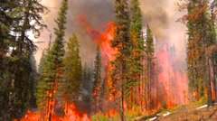 mountain forest fire, in the fire #86, wall of flame - stock footage