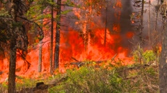 Mountain forest fire, in the fire #87 Stock Footage