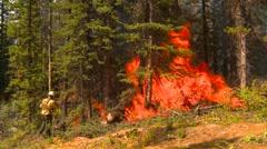 mountain forest fire, in the fire #96 fireworker torcher debris - stock footage