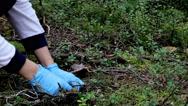 Jumping mushroom Stock Footage